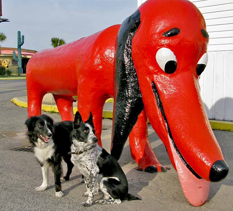 Big Red Dog Dallas